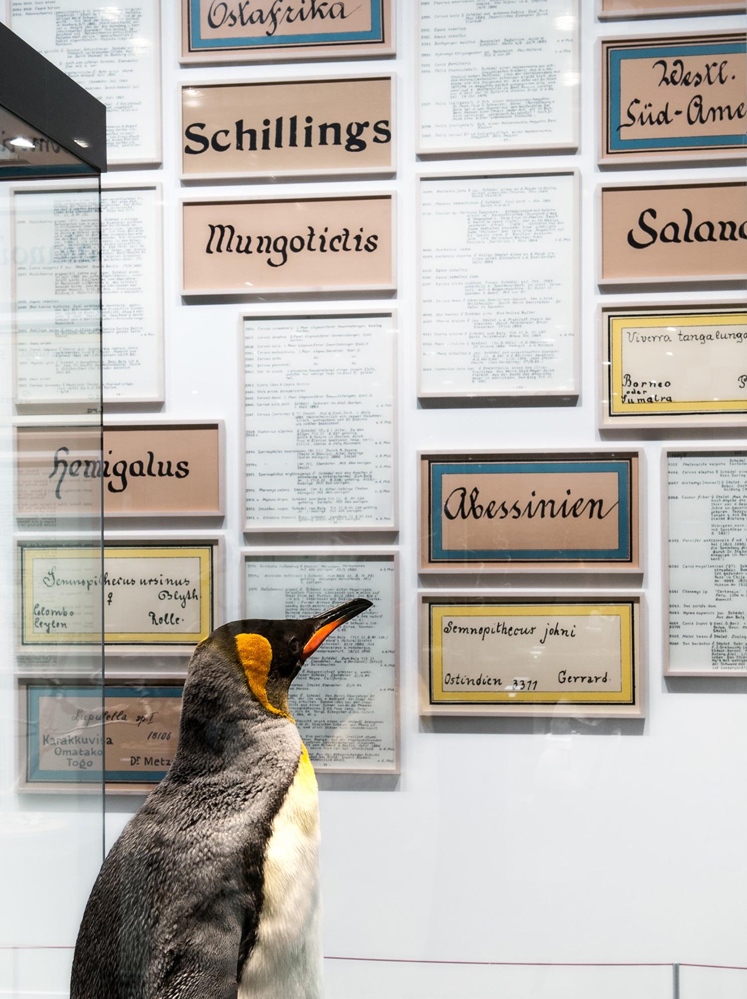 Galerie Barbara Thumm \ Fernando Bryce – Paradoxurus adustus / Auf frischer Tat